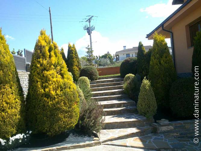 Formació d'arbusts
