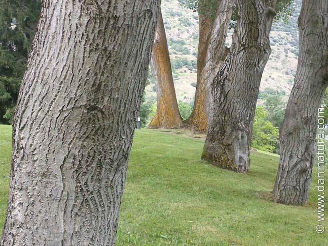 Disseny de jardins i zones verdes